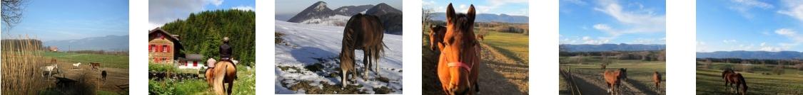 freie Pferdefotos