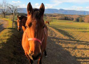 gratis pferdefotos